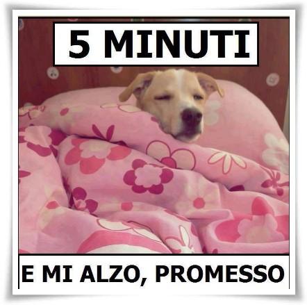 """""""5 minuti e mi alzo, promesso"""" - link divertenti"""