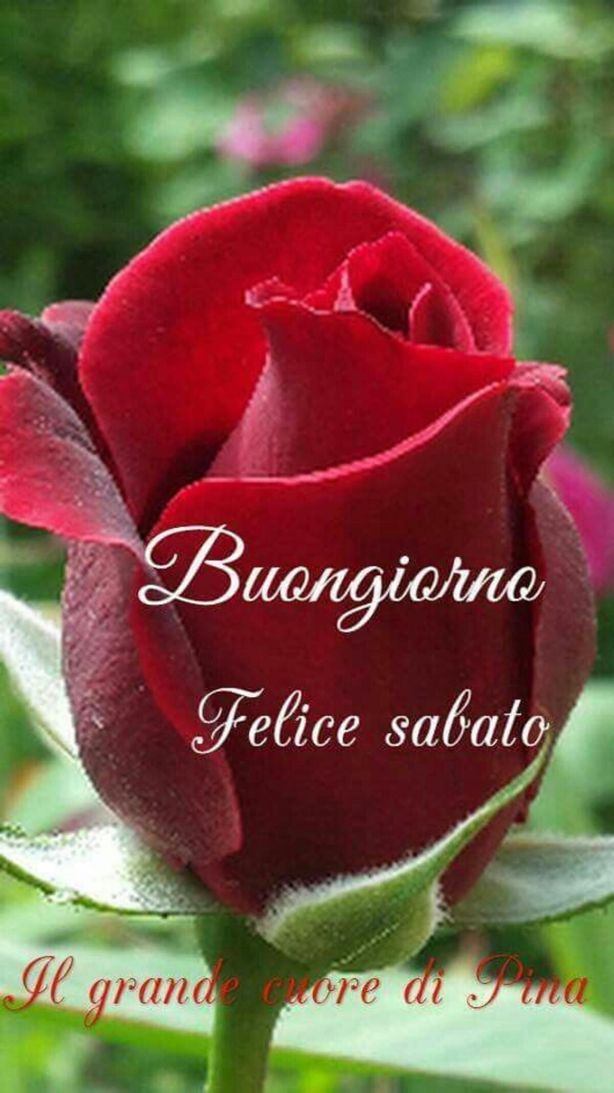 Buongiorno Felice Sabato