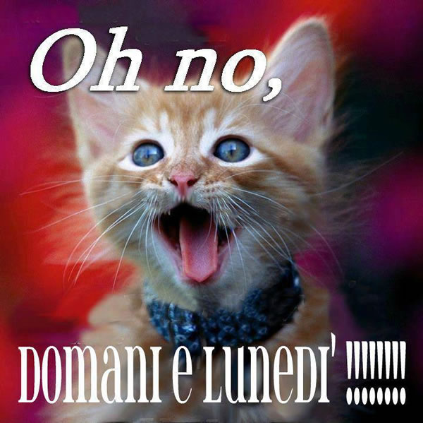 """""""Oh no, Domani è Lunedì !!!!!!!"""""""