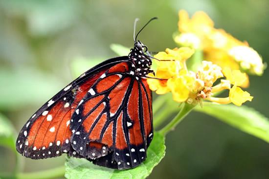 Una farfalla che si posa su un fiore