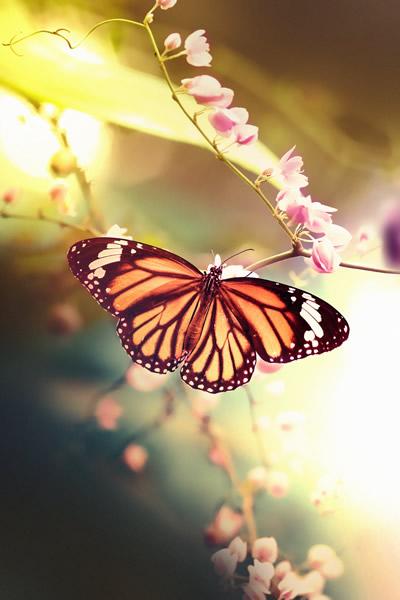 Una farfalla