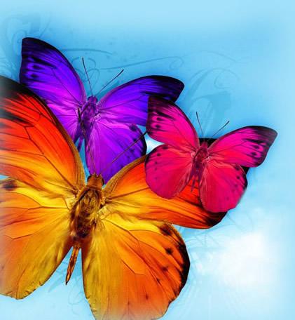 Immagini di Farfalle colorate