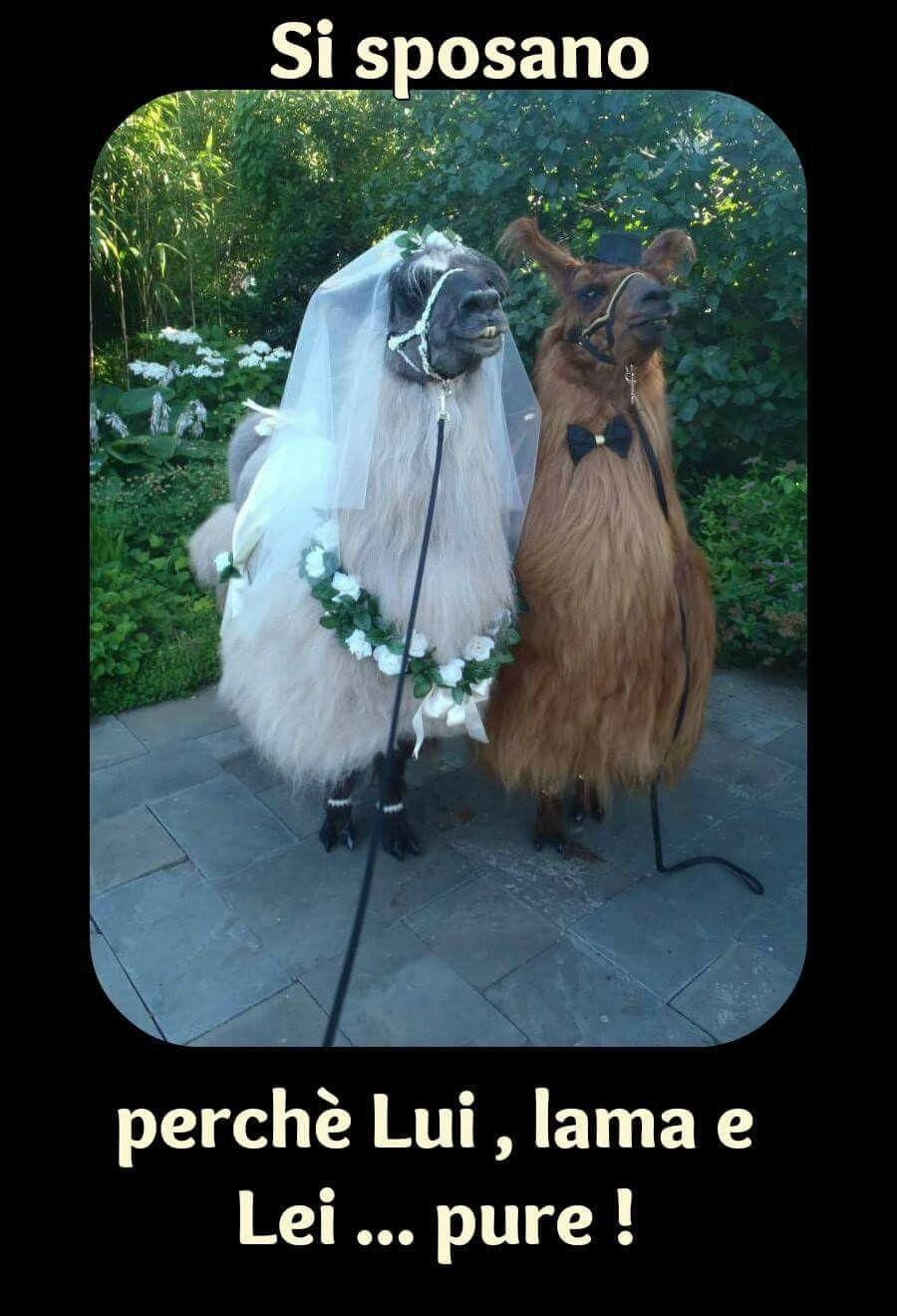 Si sposano perchè Lui, Lama e Lei... pure !!!