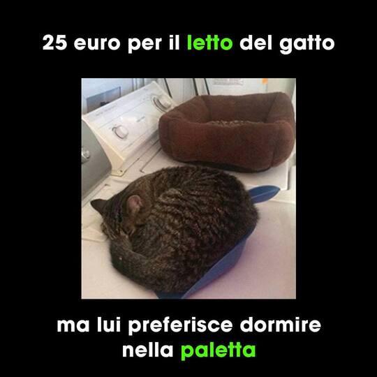 """Immagini da ridere con i gatti - """"25 Euro per il letto del gatto. Ma lui preferisce dormire nella paletta."""""""