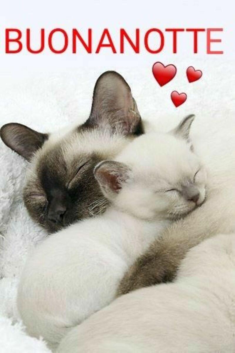 Immagini della Buona Notte con i gattini