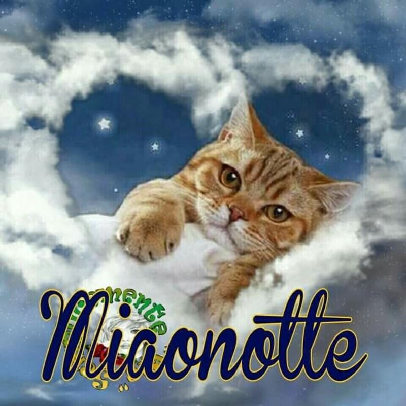"""""""Miaonotte"""" - bellissime immagini da condividere"""