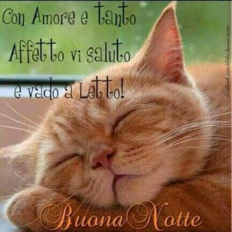 """""""Con amore e tanto affetto vi saluto e vado a letto!""""- Buonanotte con i gatti"""
