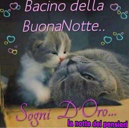 """""""Bacino della Buona Notte... Sogni d'Oro..."""""""