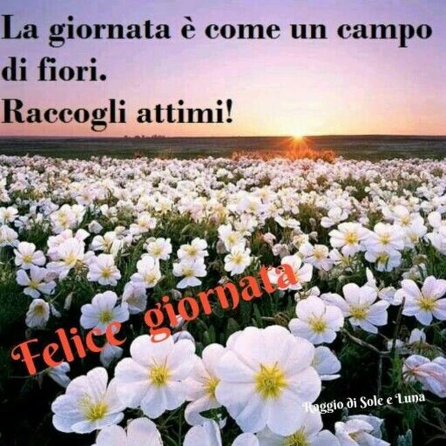 """""""La giornata è come un campo di fiori! Raccogli attimi! Felice Giornata"""" - Raggio di Sole e Luna"""