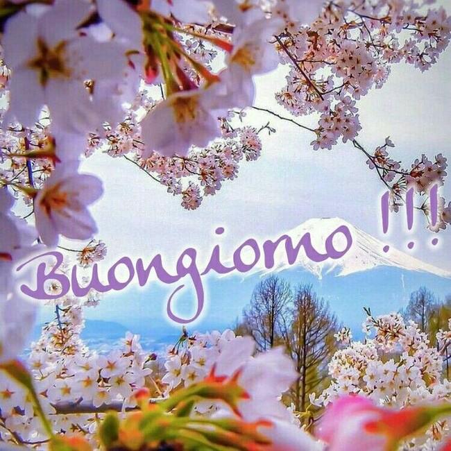 """""""Buongiorno !!!"""" - con i fiori di pesco"""