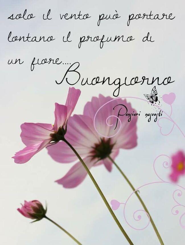 """Frasi di Buongiorno - """"Solo il vento può portare lontano il profumo di un fiore... Buongiorno"""""""