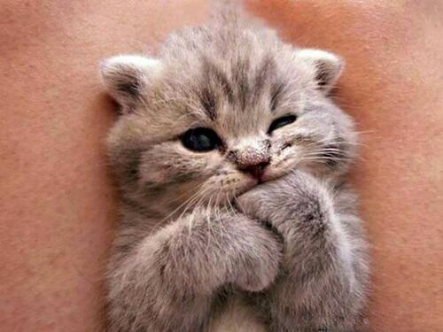 Un micio dolcissimo - animali teneri