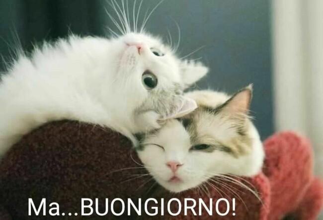 """""""Ma... BUONGIORNO!"""" - immagini con i gattini"""