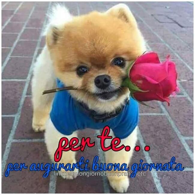 """""""Per Te... Per augurarti Buona Giornata..."""" - immagini con i cani"""