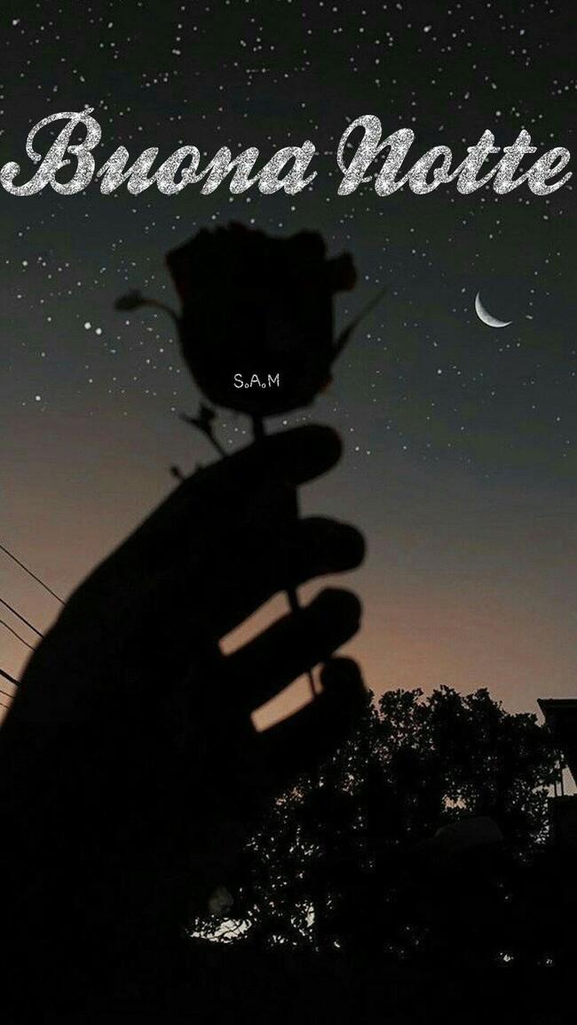 Buona Notte con una rosa