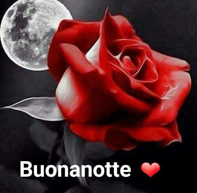 Immagini Buonanotte con la Luna piena ed una rosa rossa
