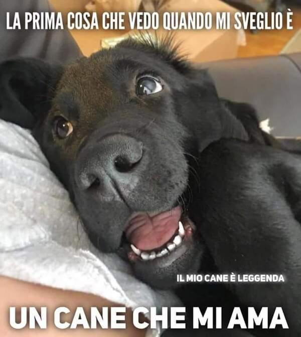 """""""La prima cosa che vedo quando mi sveglio è: un cane che mia ama"""" - Frasi belle sui cani"""