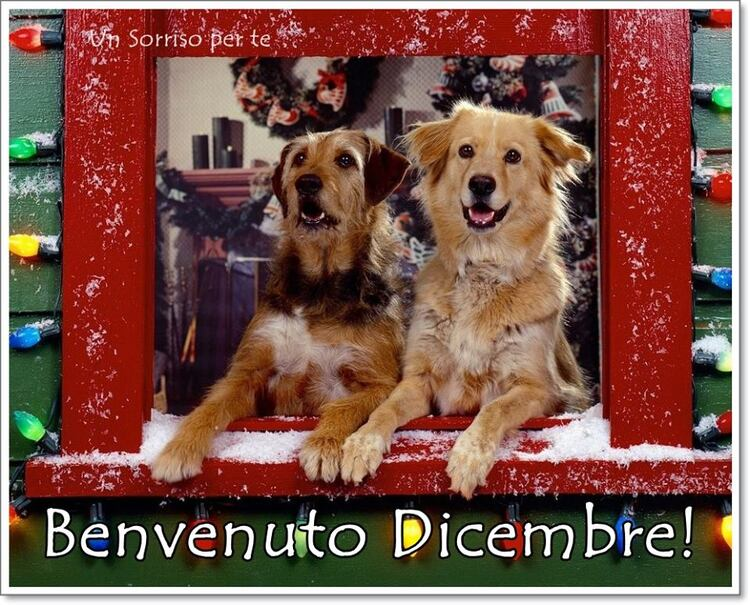 """Benvenuto Dicembre!"""