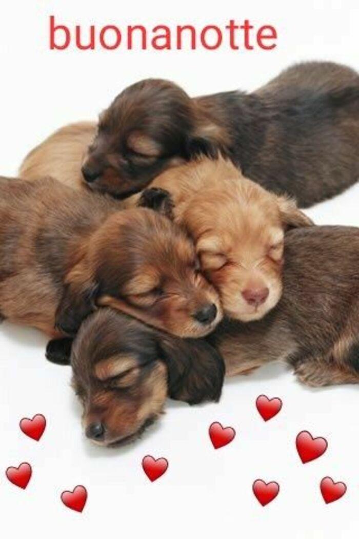 Buona Notte immagini con i cagnolini