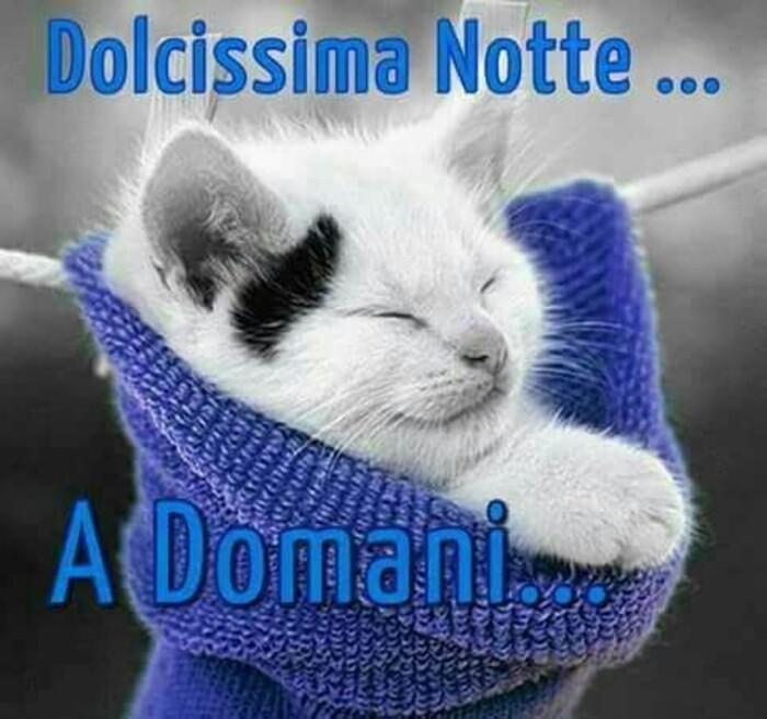 """""""Dolcissima Notte... a Domani..."""" - con un gattino"""